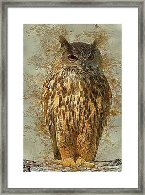 Owl Framed Print by Jack Zulli