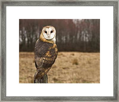 Owl Looking At Camera Framed Print by Jody Trappe Photography