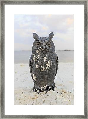Owl On The Beach Framed Print by Edward Fielding