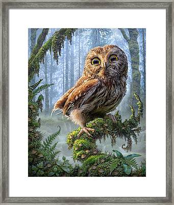 Owl Perch Framed Print by Phil Jaeger