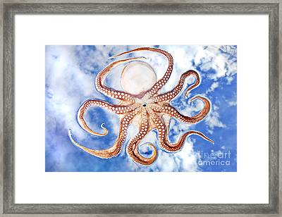 Pacific Octopus Framed Print by Mike Raabe