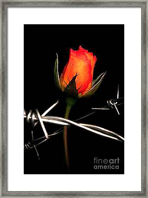 Painfull Framed Print by Tbone Oliver