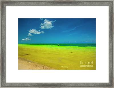 Painted By Nature, Florida Keys Framed Print by Felix Lai