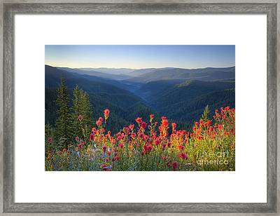 Painted Forest Framed Print by Idaho Scenic Images Linda Lantzy