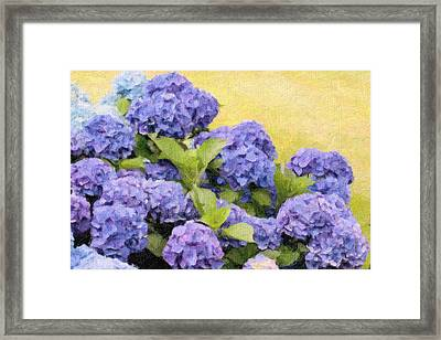 Painted Hydrangeas Framed Print by Gina Cormier