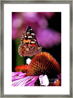 Painted Lady Framed Print by Lila Fisher-Wenzel