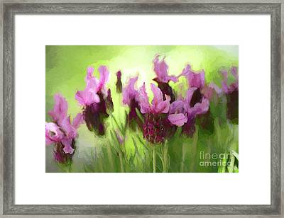 Painted Lavender By Kaye Menner Framed Print by Kaye Menner