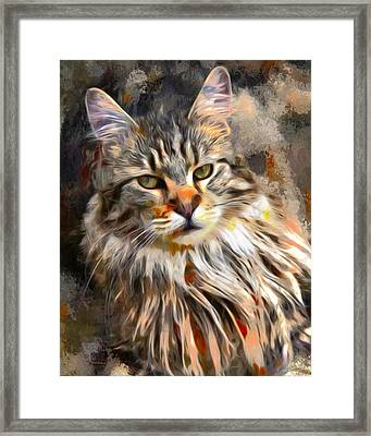 Painted Main Coon Cat Framed Print by Scott Wallace