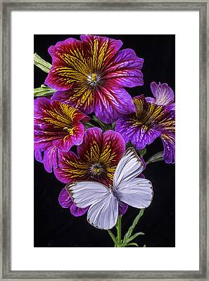 Painted Tongue With White Butterfly Framed Print by Garry Gay