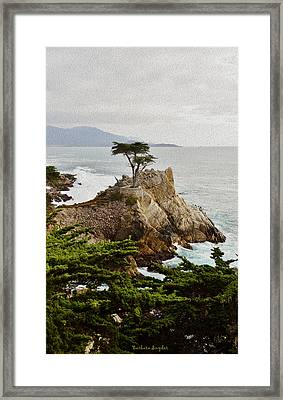 Painting Lone Cypress Monterey Framed Print by Barbara Snyder