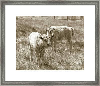 Pair Of Baby Buffalos Framed Print by Rebecca Margraf