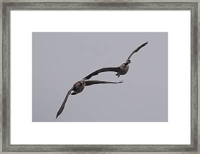 Pair Of Geese Framed Print by Paul Freidlund