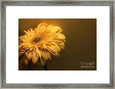 Pale Framed Print by Clare Bevan