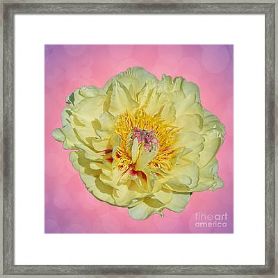 Pale Yellow Tropical Flower Bokeh Framed Print by Terry Weaver
