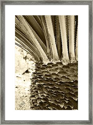 Palm Abstraction Framed Print by Ben and Raisa Gertsberg