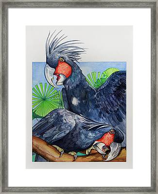 Palm Cockatoos Framed Print by Robert Lacy
