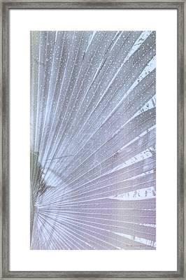 Palm Frond High Key Rh Framed Print by Marvin Spates