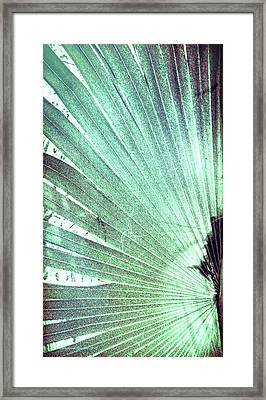Palm Frond-lh Framed Print by Marvin Spates