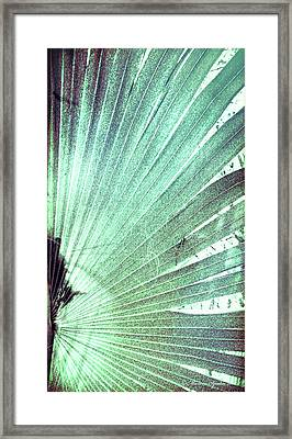 Palm Frond-rh Framed Print by Marvin Spates