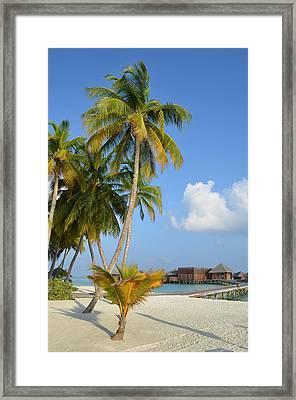 Palm Paradise Framed Print by Corinne Rhode