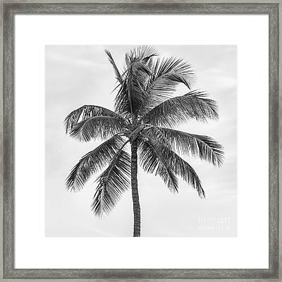 Palm Tree Framed Print by Elena Elisseeva