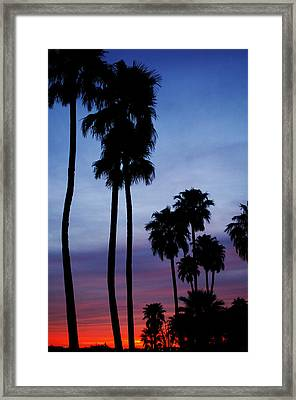 Palm Trees At Sunset Framed Print by Jill Reger