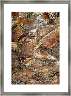Palm Trunk Abstract By Kaye Menner Framed Print by Kaye Menner