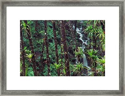 Palm Trunks And Waterfall El Yunque Framed Print by Thomas R Fletcher