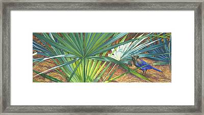Palmettos And Stellars Blue Framed Print by Marguerite Chadwick-Juner