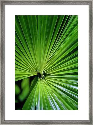Palmgreen Framed Print by Al Hurley