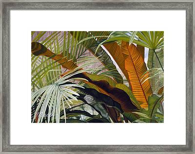 Palms At Fairchild Gardens Framed Print by Stephen Mack