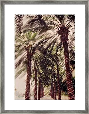 Palmtree Framed Print by Jeanette Korab