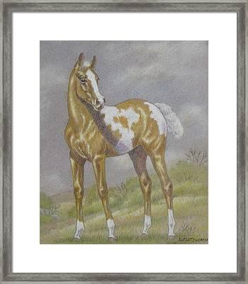Palomino Paint Foal Framed Print by Dorothy Coatsworth