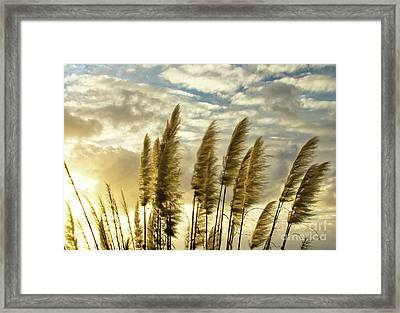 Pampas Grass Framed Print by Julia Hiebaum