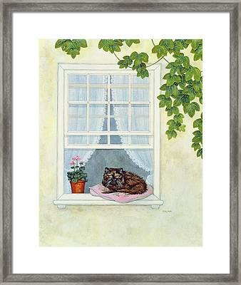 Pam's Cat  Framed Print by Ditz