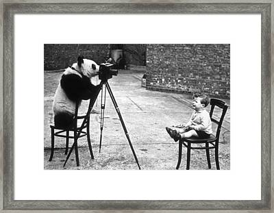 Panda Photographer Framed Print by Bert Hardy