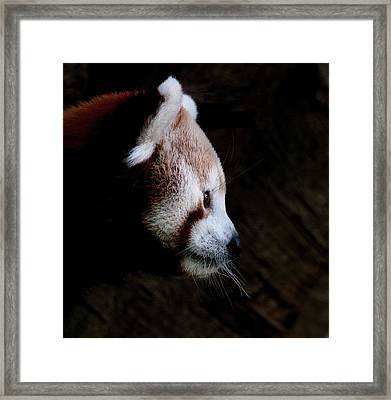 Panda Profile Framed Print by Heather Thorning