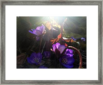 Flowers In Pandora Framed Print by Renata Vogl