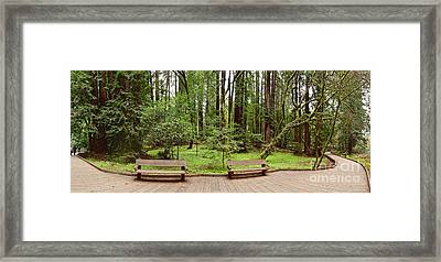 Panorama Of Muir Woods National Monument Boardwalk - Marin County California Framed Print by Silvio Ligutti