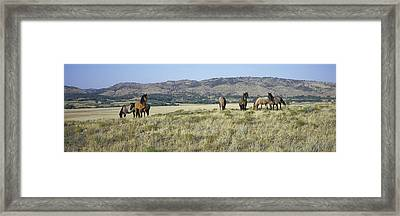 Panoramic Image Of Wild Horses Of Black Framed Print by Panoramic Images