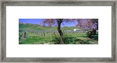Panoramic View Of Golden California Framed Print by Panoramic Images