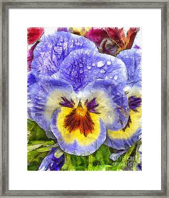 Pansy Pencil Framed Print by Edward Fielding