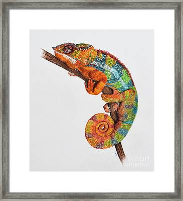 Panther Chameleon Framed Print by Biophilic Art