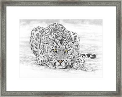 Panthera Pardus - Leopard Framed Print by Steven Paul Carlson