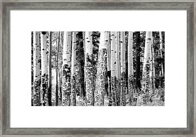Paper Birch Framed Print by Julie Lueders