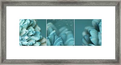 Paper Flower Framed Print by Lisa Knechtel