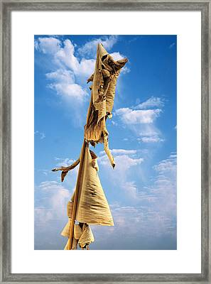 Paperbark Tree Framed Print by Christine Till