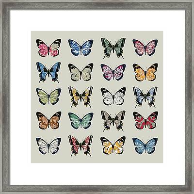 Papillon Framed Print by Sarah Hough