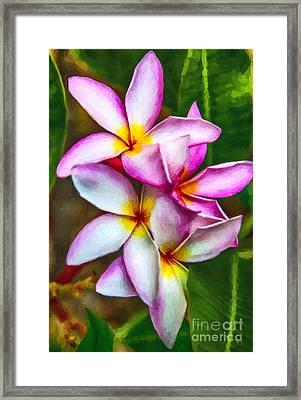Paradise Pink Plumeria Framed Print by David Millenheft