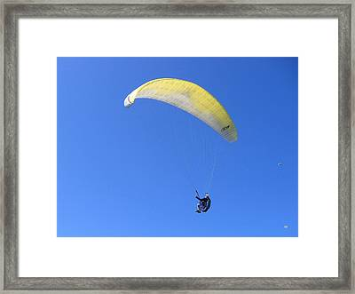Paraglider And Seagull Framed Print by Will Borden